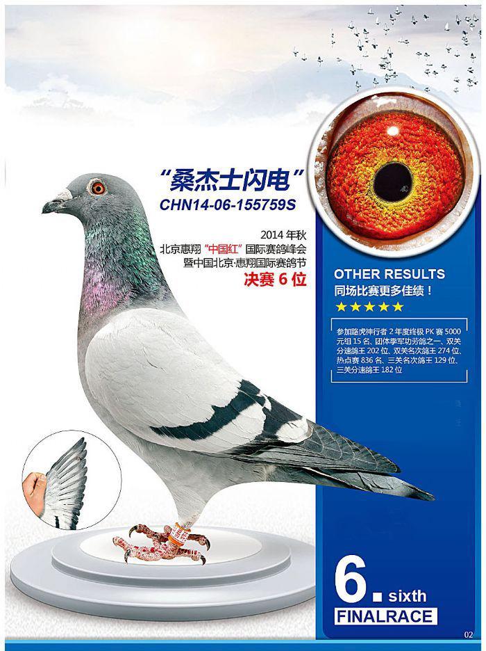 中国惠翔决赛6名'闪电金翼满天星'