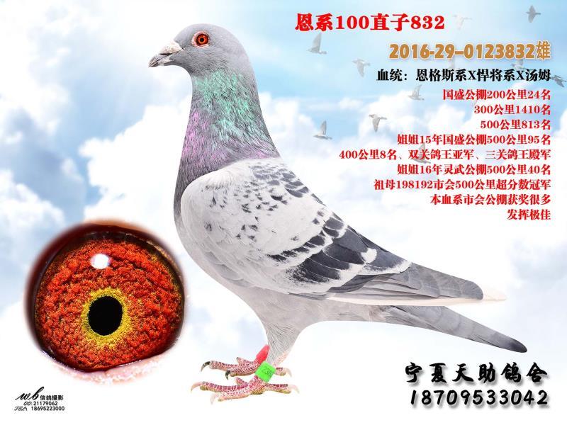 恩系100直子832(昆明)