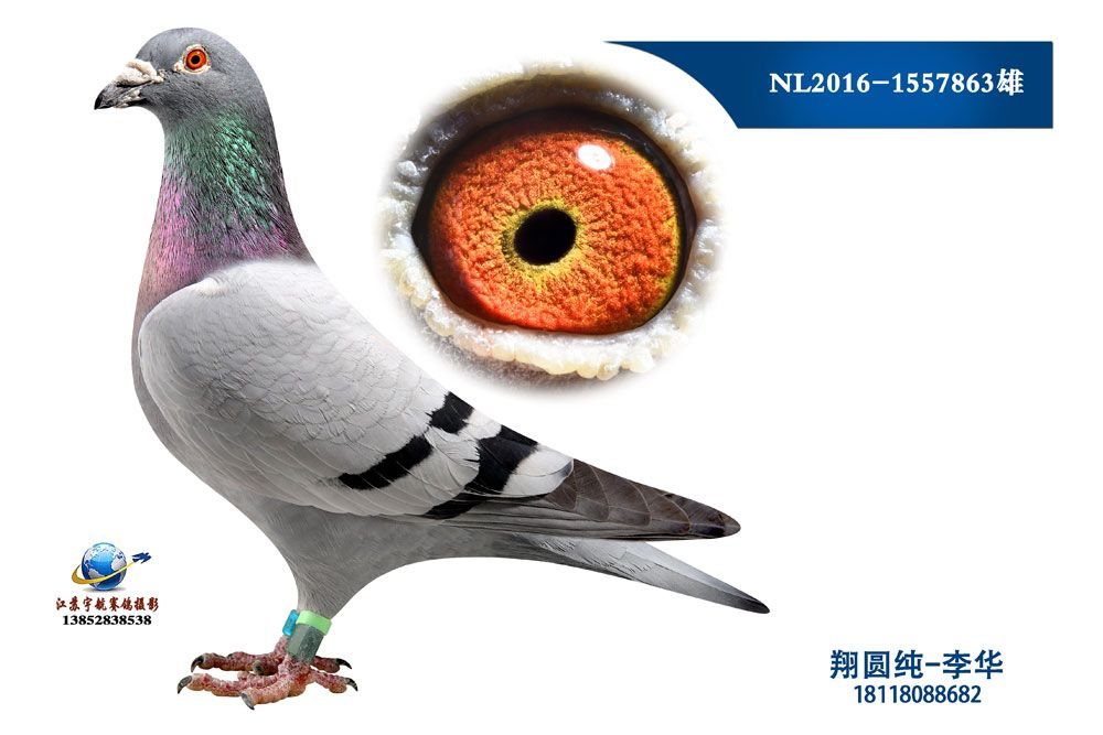 NL2016-1557863雄