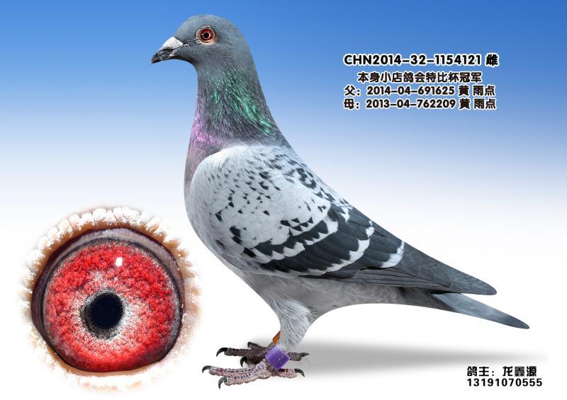 龙鑫121