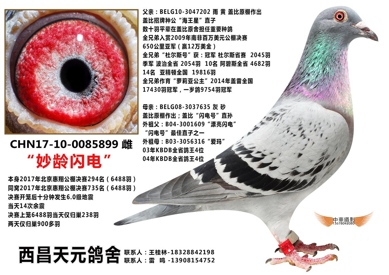 北京惠翔公棚决赛294名(妙龄闪电)