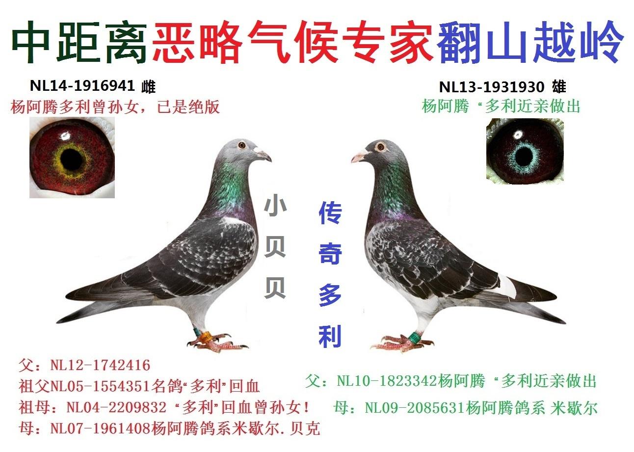 杨阿腾★环保设备批发,光氧,布袋,催化燃