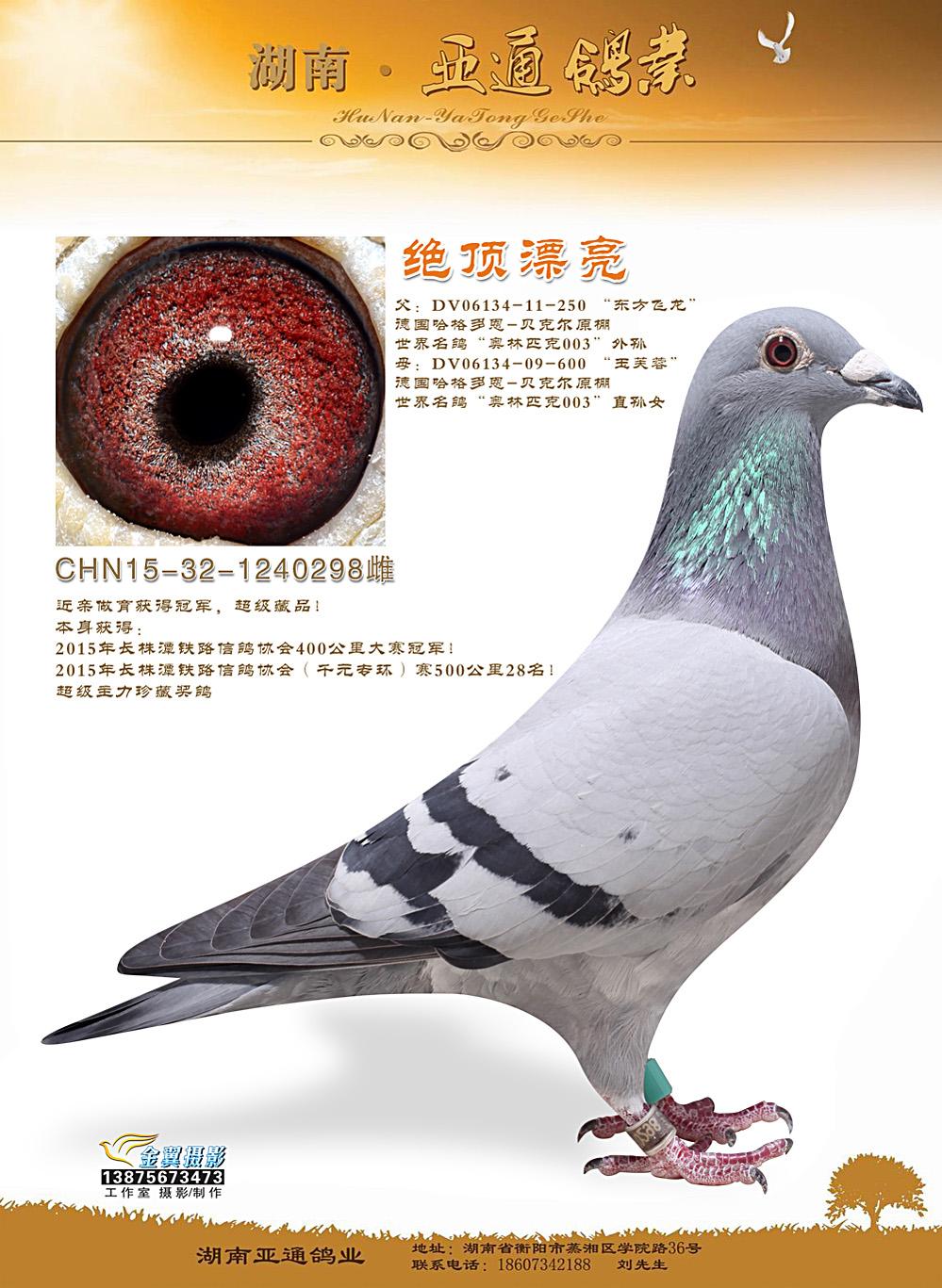 2015年长株潭信鸽协会400公里冠军