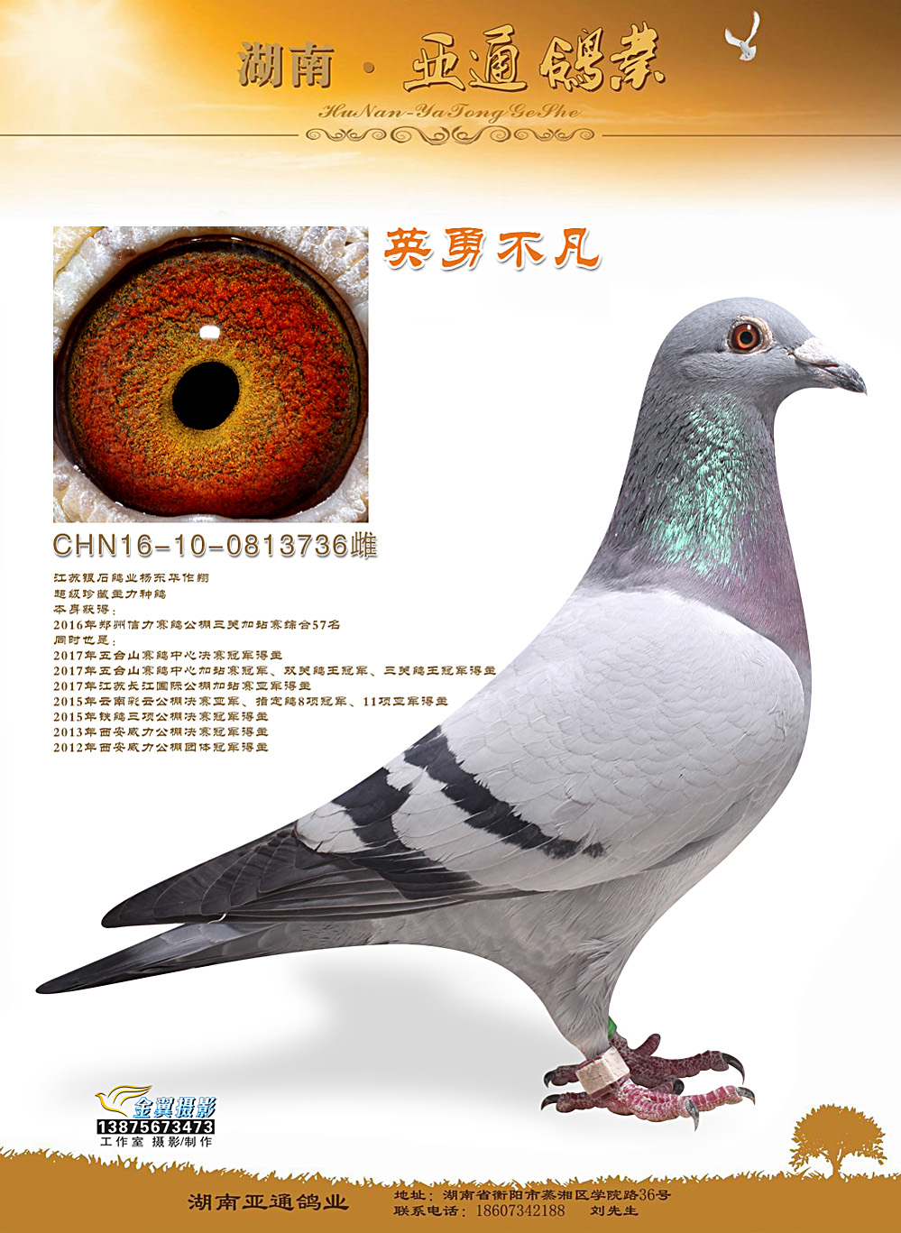 2016年郑州信力赛鸽公棚加站综合57名