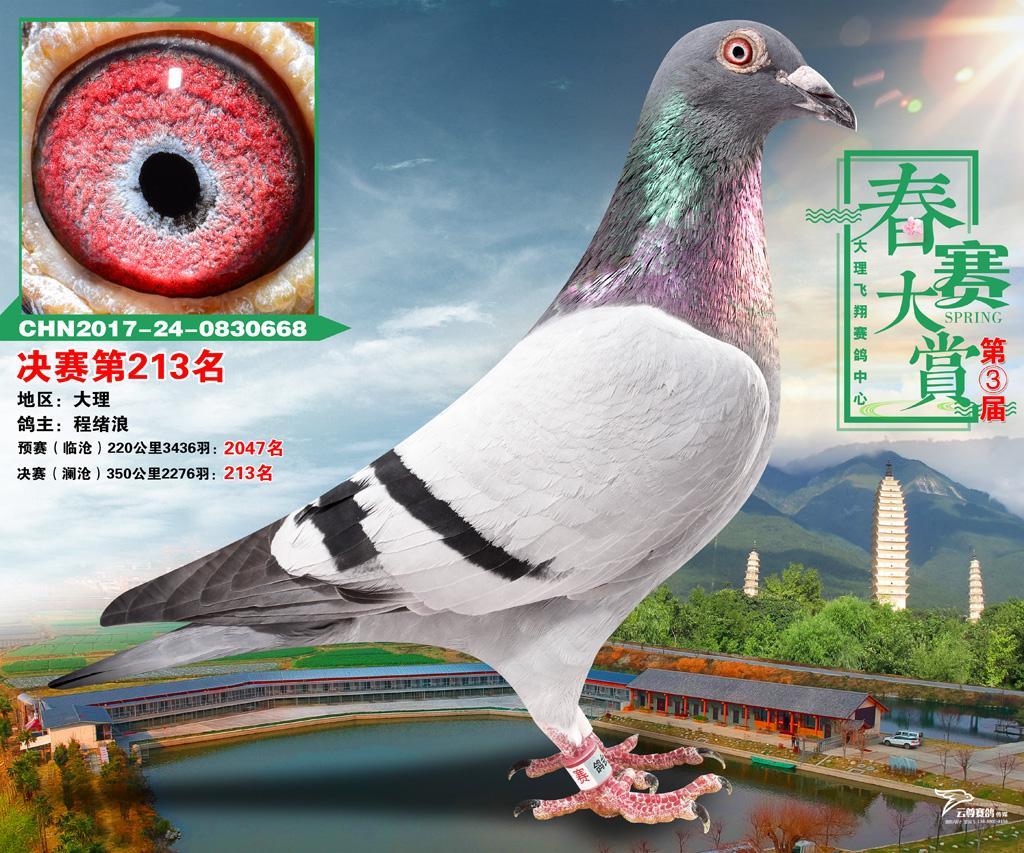668色情网_飞翔668_云南滇一鸽苑-中信网爱鸽商城