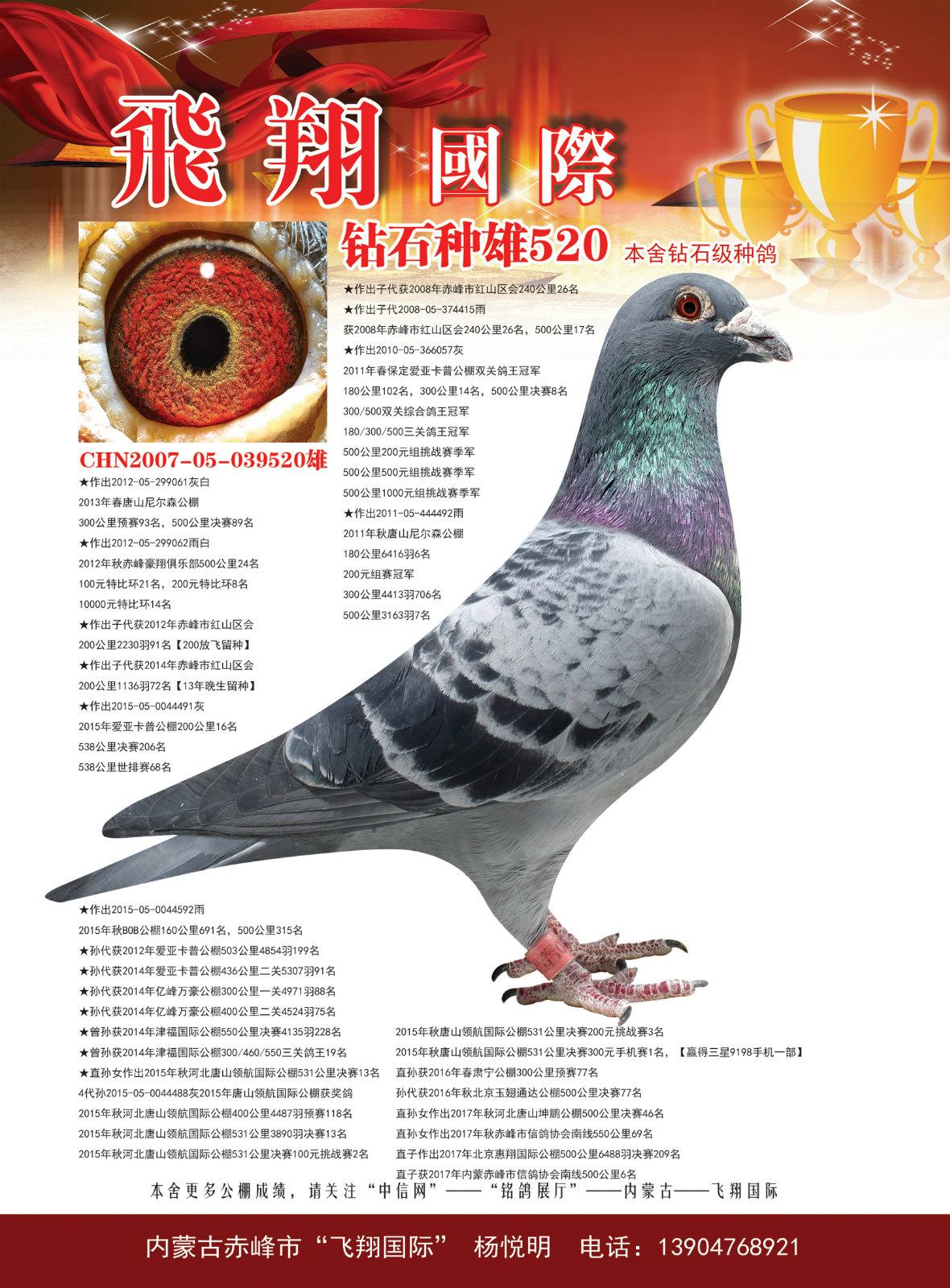 鸽王冠军之父520