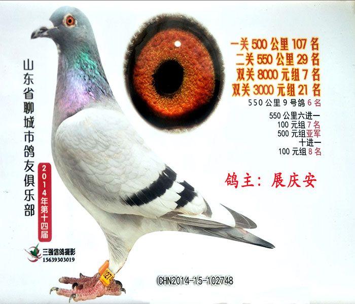 特留重要种鸽