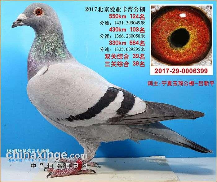 CHN2017-29-0006399