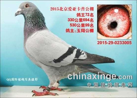 CHN2015-29-0233005