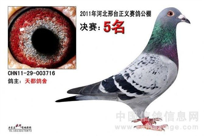 CHN2011-29-003716