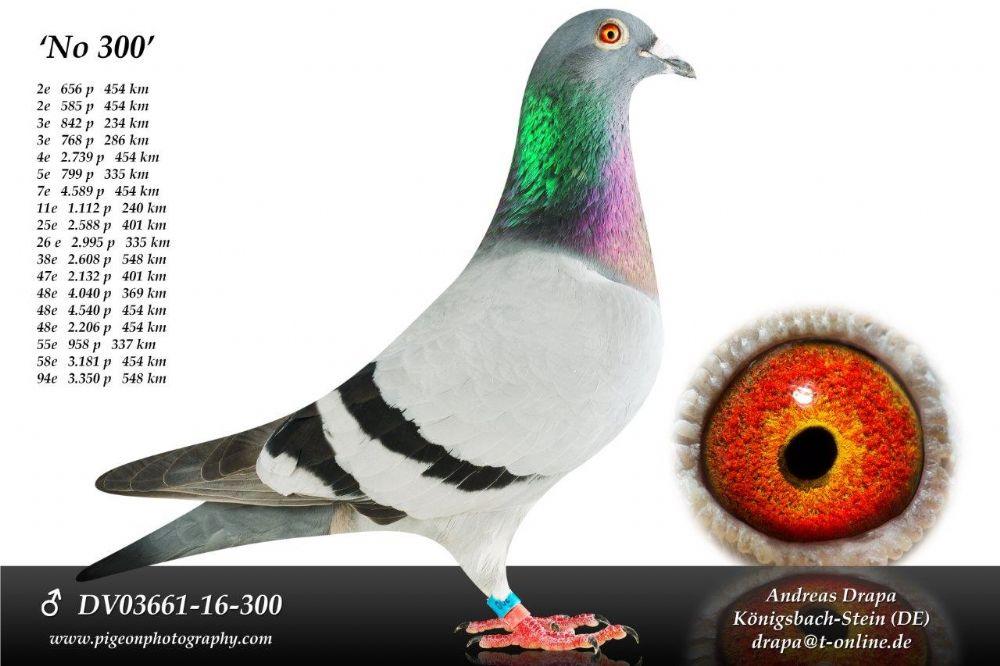 DV03661-16-300_main