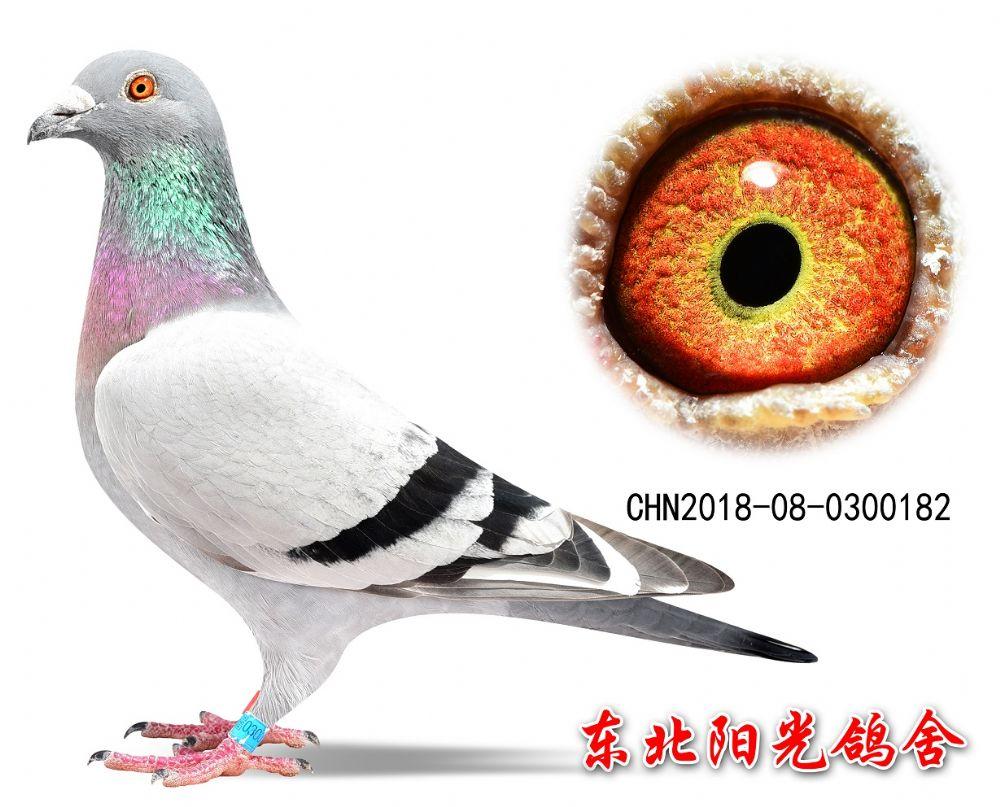 57、CHN2018-08-0300182副本