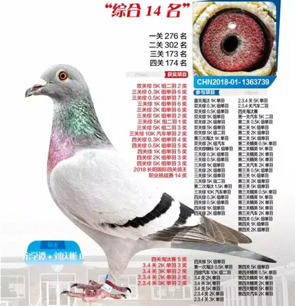 2018年秋季.北京长阳.四关综合14名