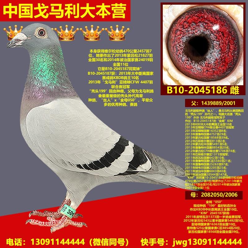 B10-2045186雌
