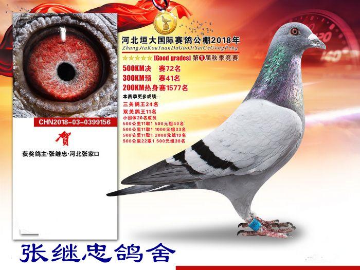 垣大公棚预赛41决赛72双关鸽王11