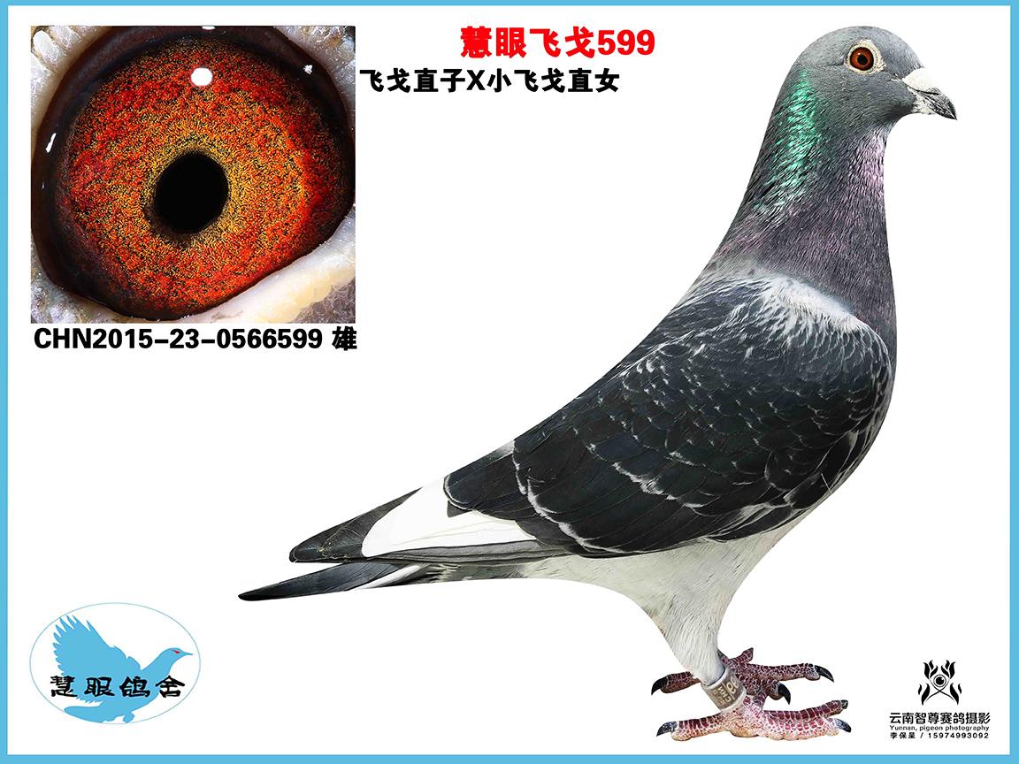 慧眼飞戈599(巳售北京)