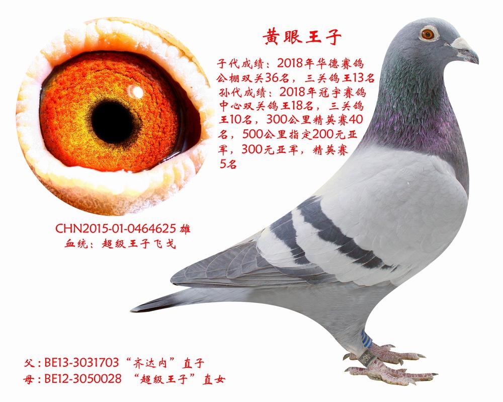 黄眼王子【鸽王之父】