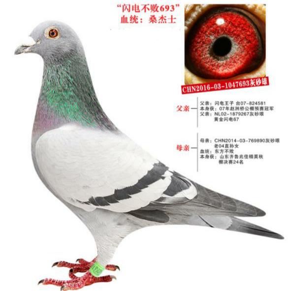 东方不败693已售北京鸽友