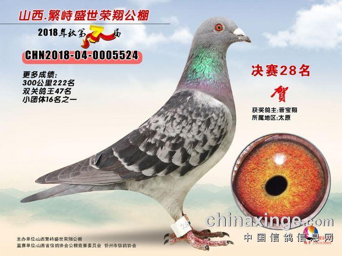 2018年繁峙盛世荣翔公棚决赛28名