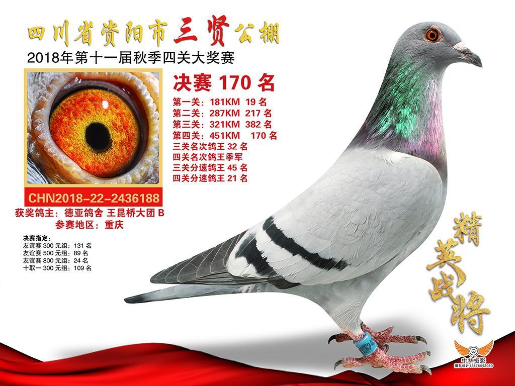 三贤 四关鸽王季军 VIP