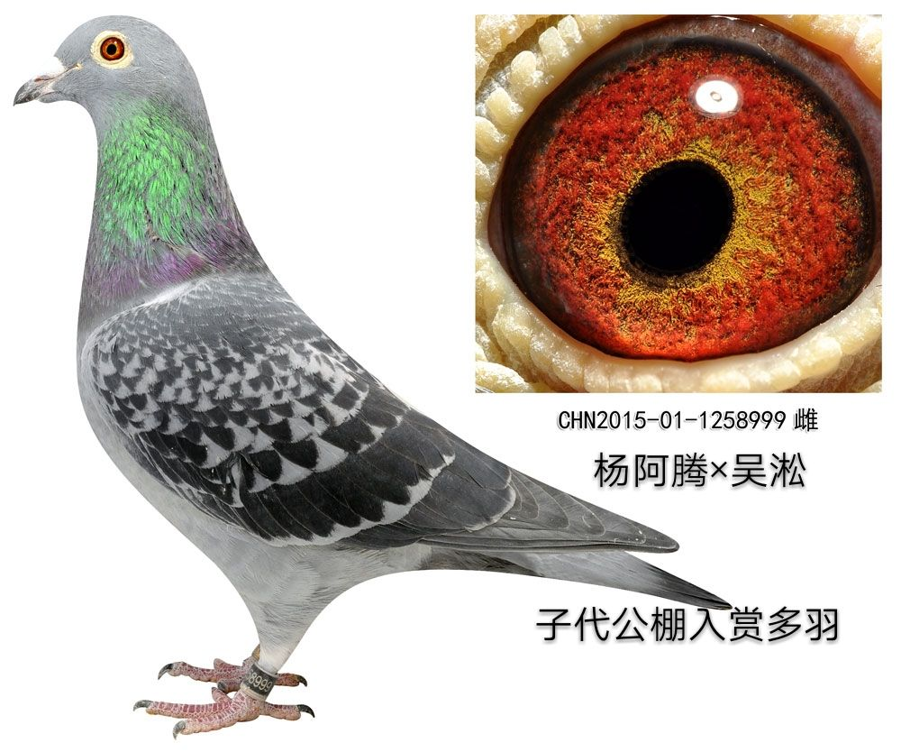 杨阿腾999