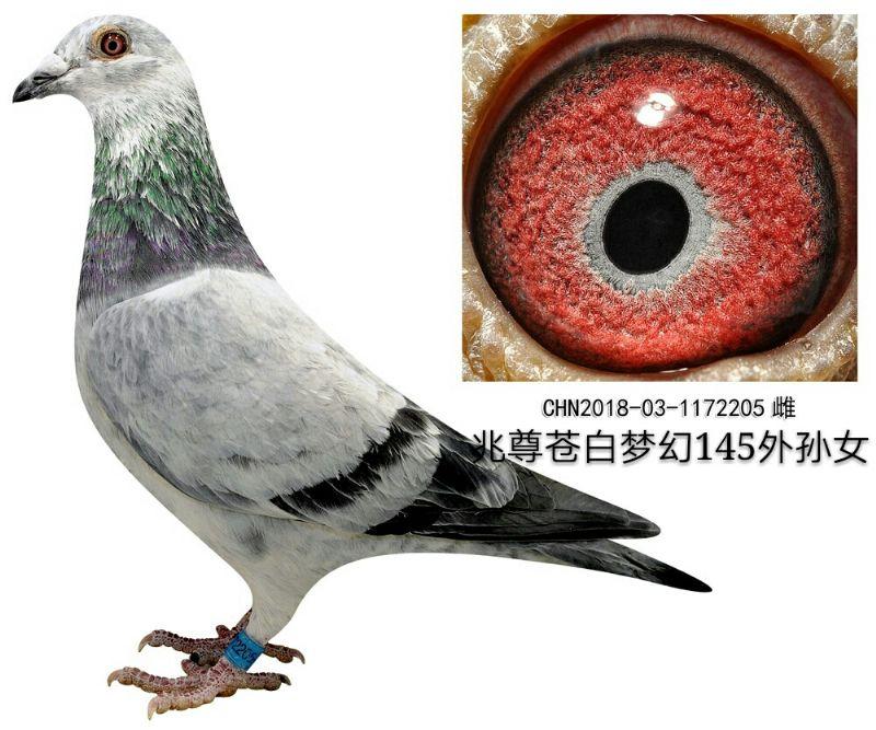 苍白205