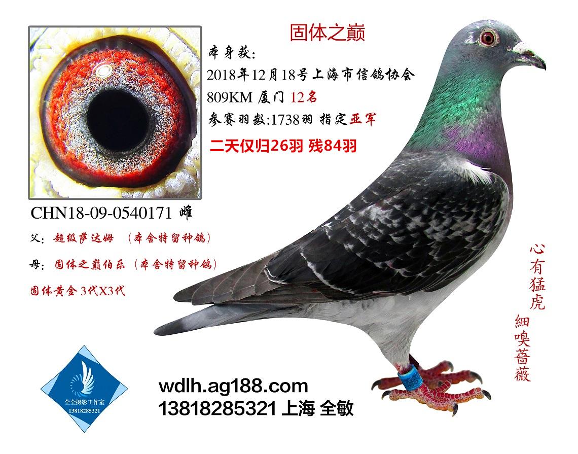 18年上海市800KM12名已转鸽友收藏