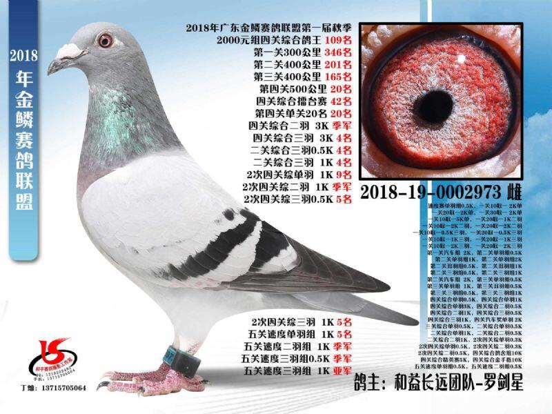 金鳞赛鸽联盟第一届秋季四关鸽王109名