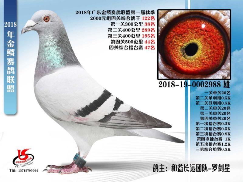 金鳞赛鸽联盟第一届秋季四关鸽王122名