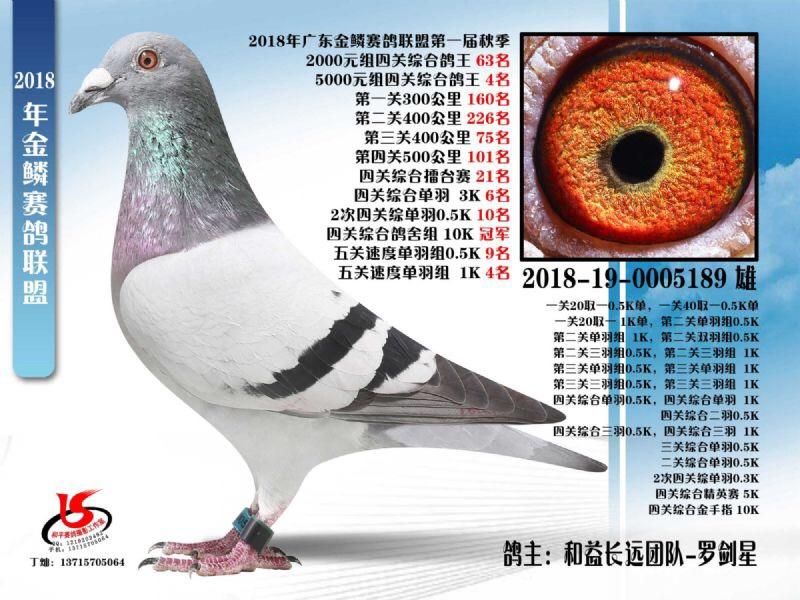 金鳞赛鸽联盟第一届秋季四关鸽王63名