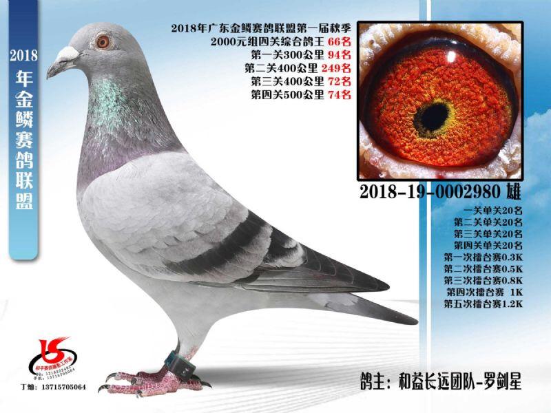金鳞赛鸽联盟第一届秋季四关鸽王66名