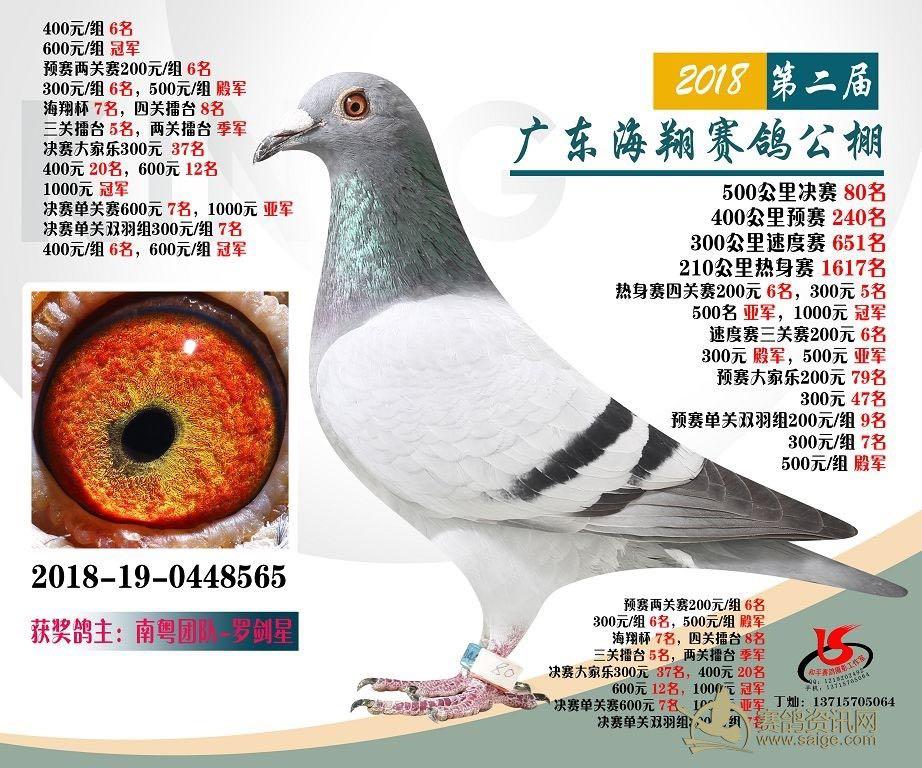 广东海翔赛鸽公棚500公里决赛80名