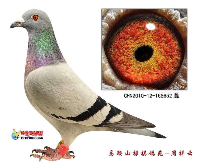 桑杰士禄祺652