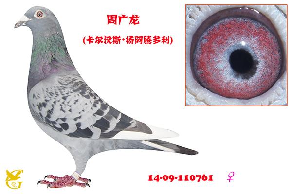 周广龙・110761