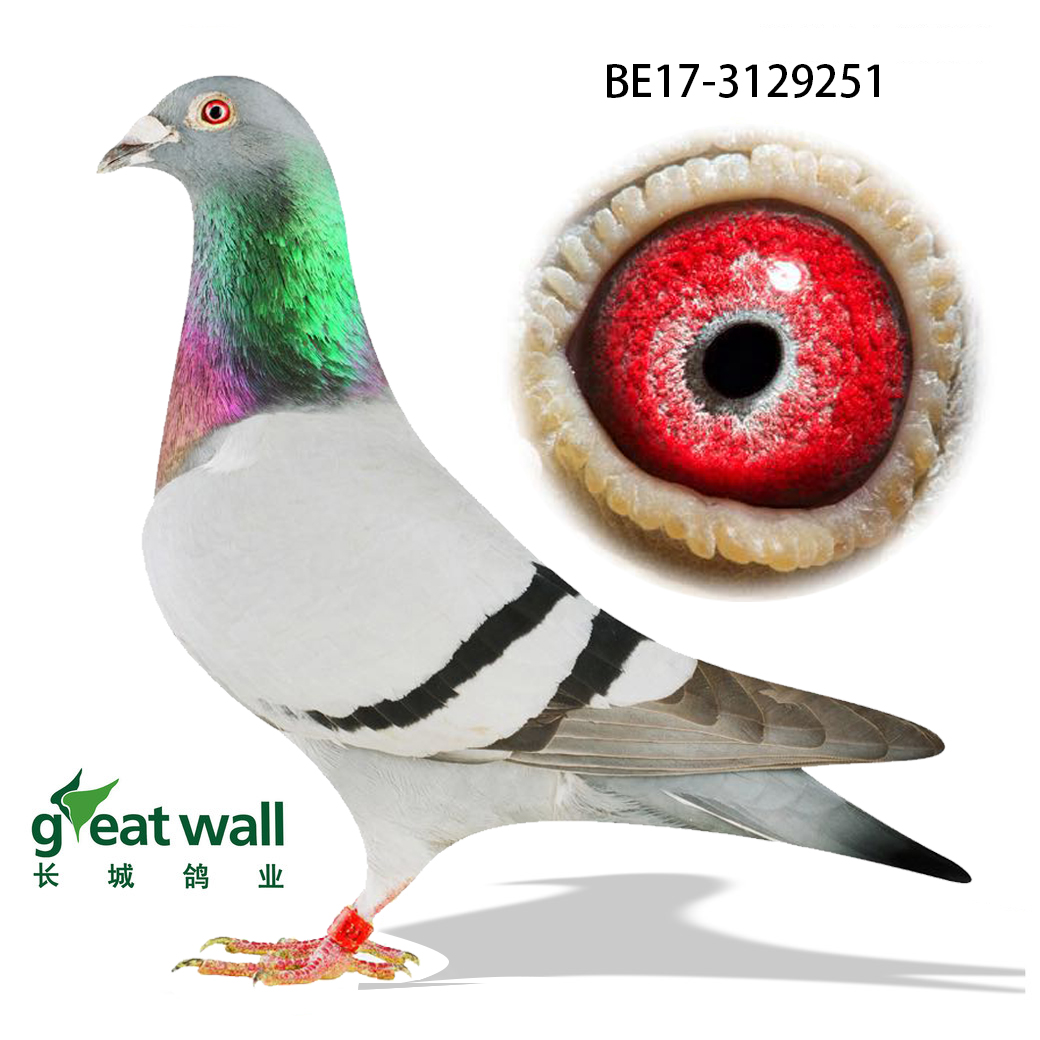 〖18利蒙治II全国7230羽一岁鸽冠军