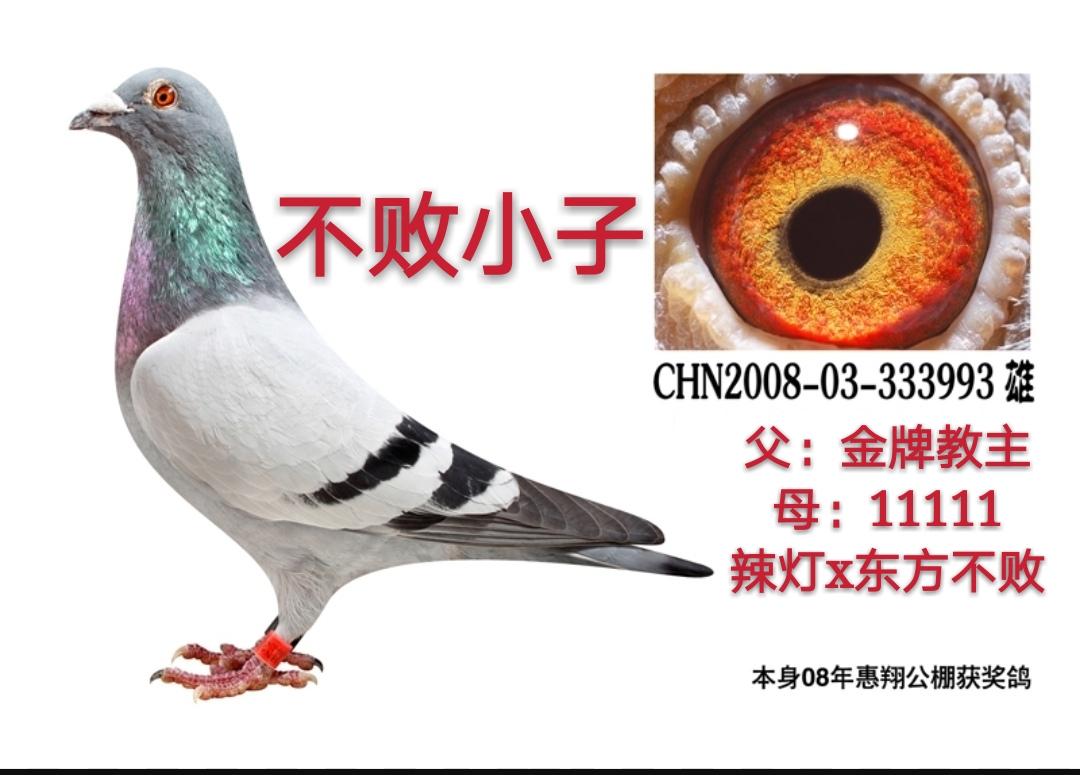 金牌教主*(辣灯*东方不败)直女1111