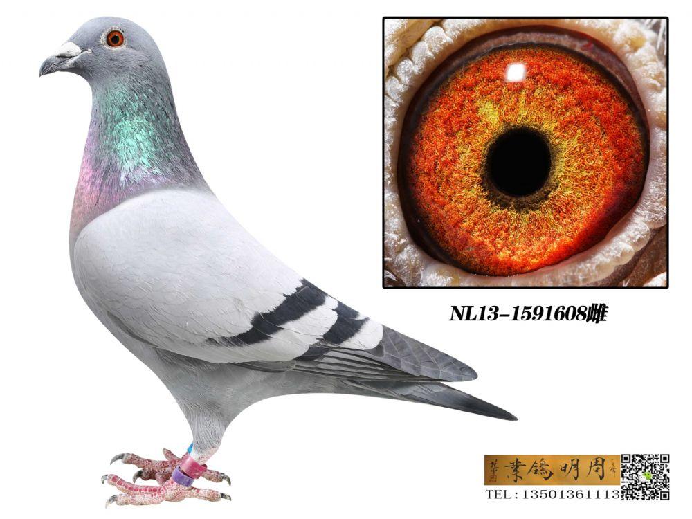 NL13-1591608