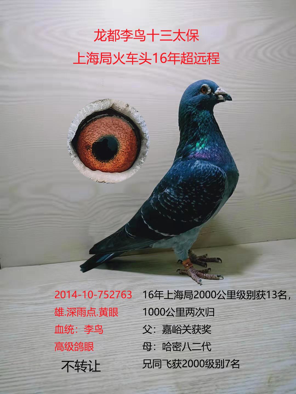 龙都李鸟2763