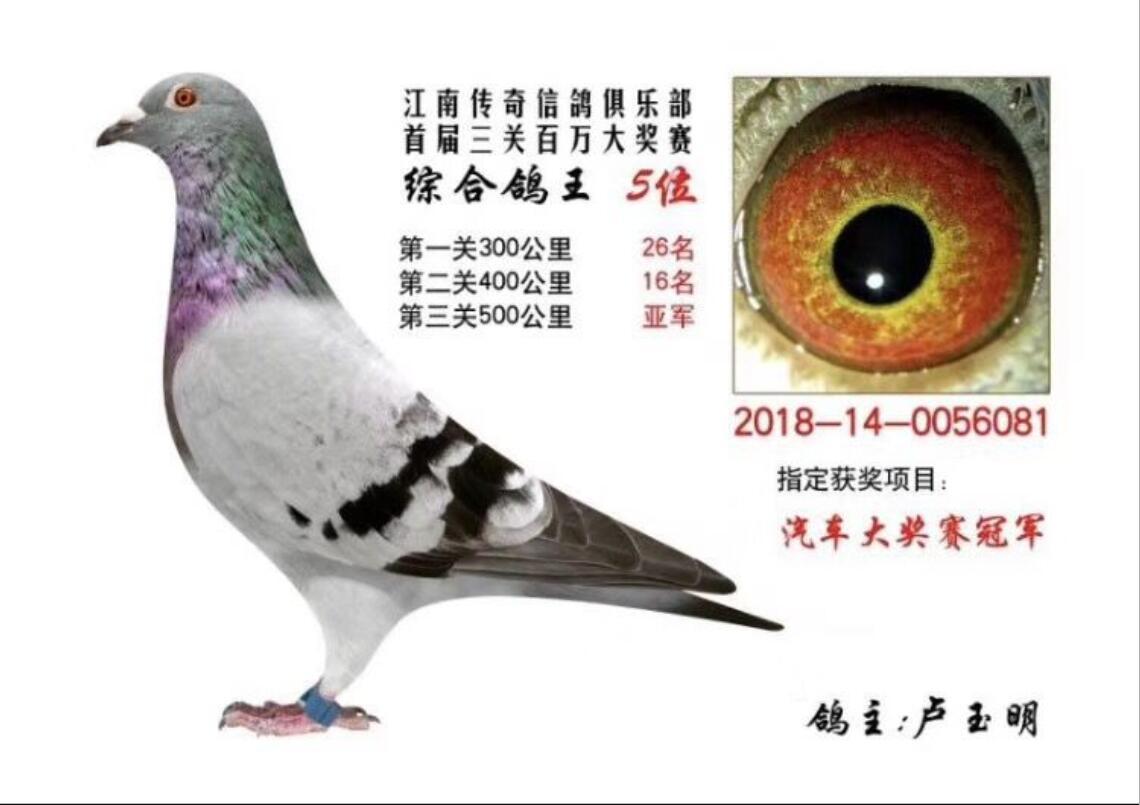 18年江南传奇信鸽俱乐部鸽王5名!
