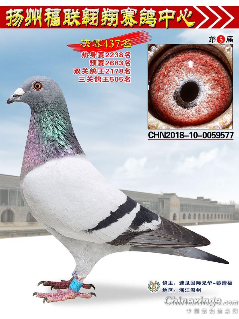 扬州公棚奖鸽2