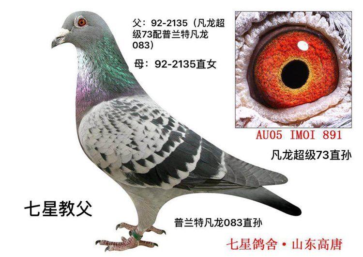 """凡龙超级73直孙""""七星教父"""""""
