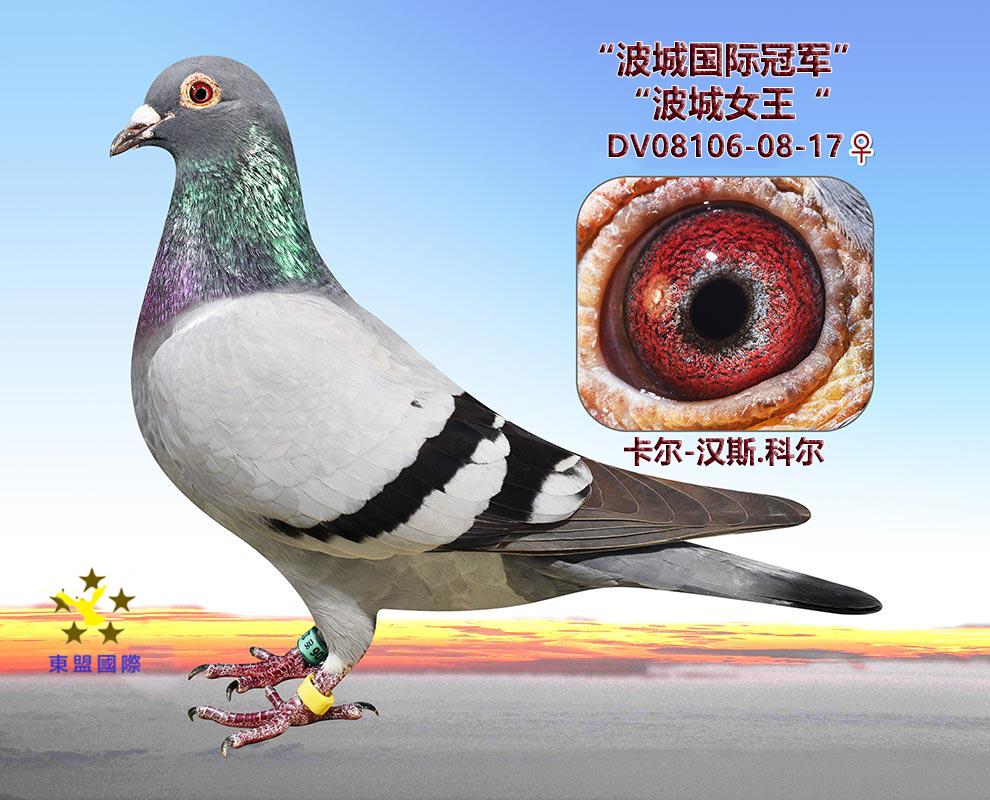 """""""波城女王""""/波城国际冠军"""