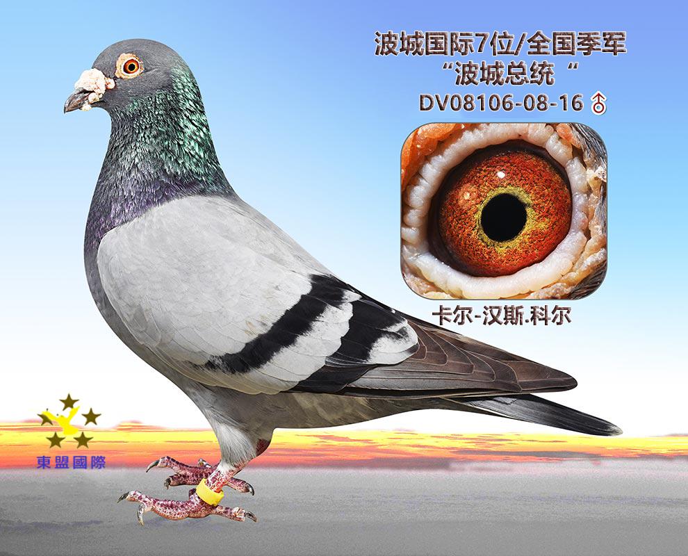 """""""波城总统""""/波城国际7位/全国季军"""