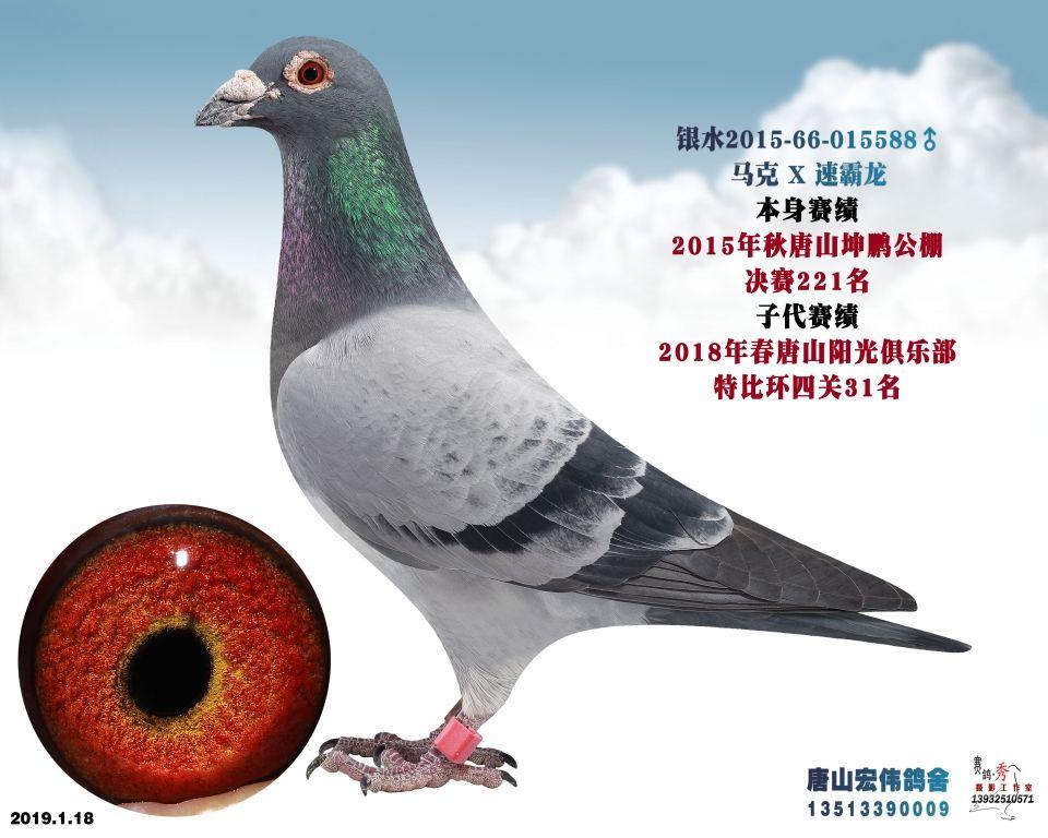 坤鹏221