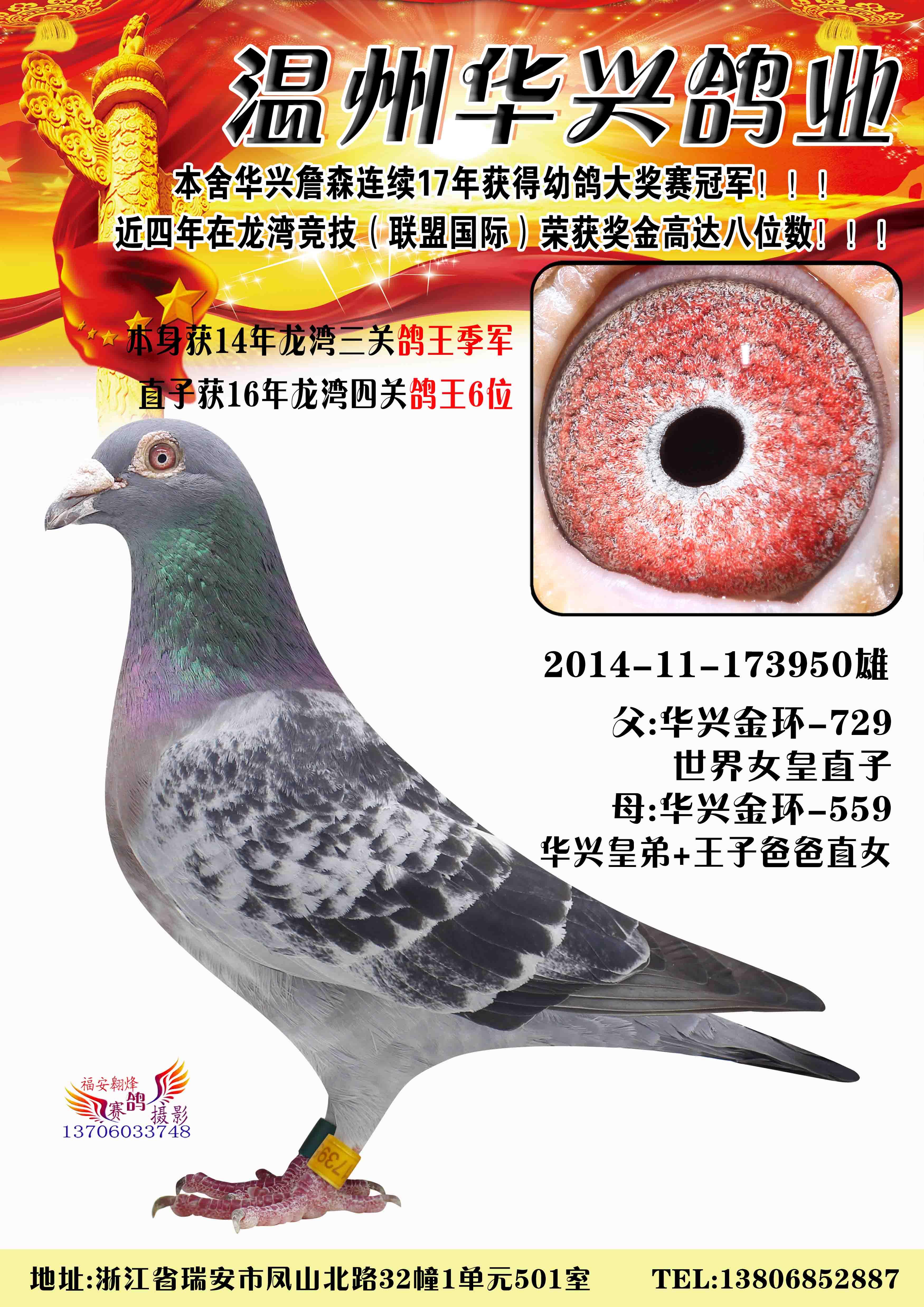 2014温州龙湾三关鸽王季军