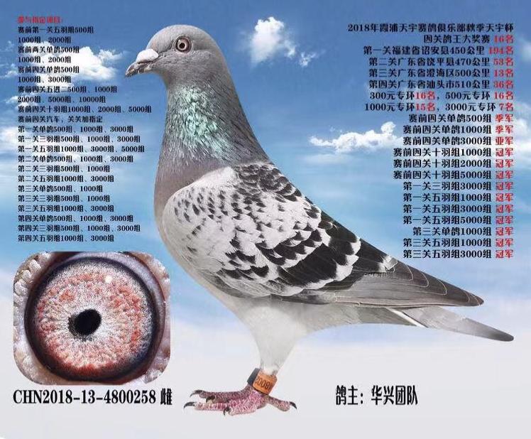 2018霞浦天宇四关鸽王16名