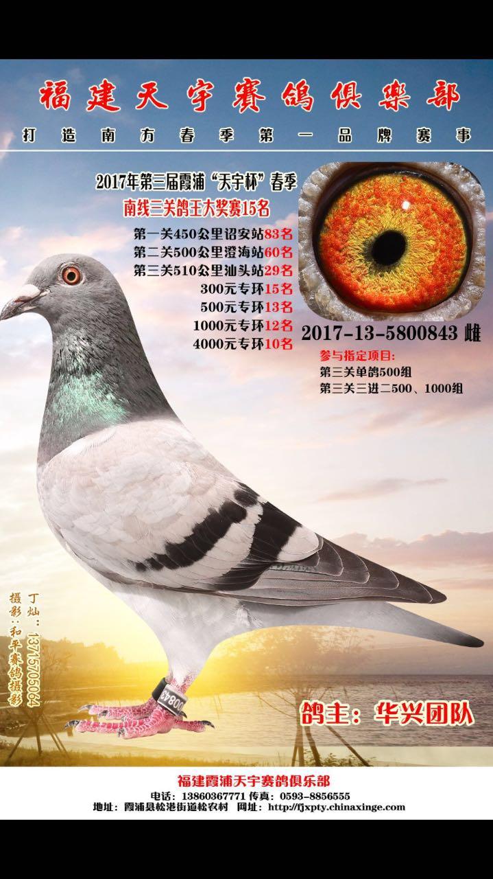 2017霞浦天宇春赛三关鸽王15名