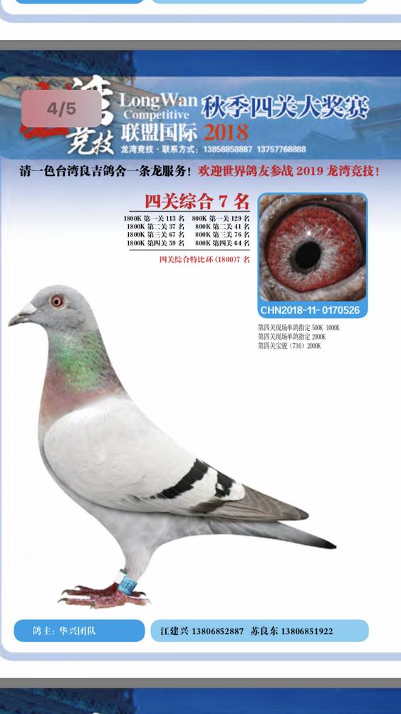 2018龙湾四关综合鸽王7名
