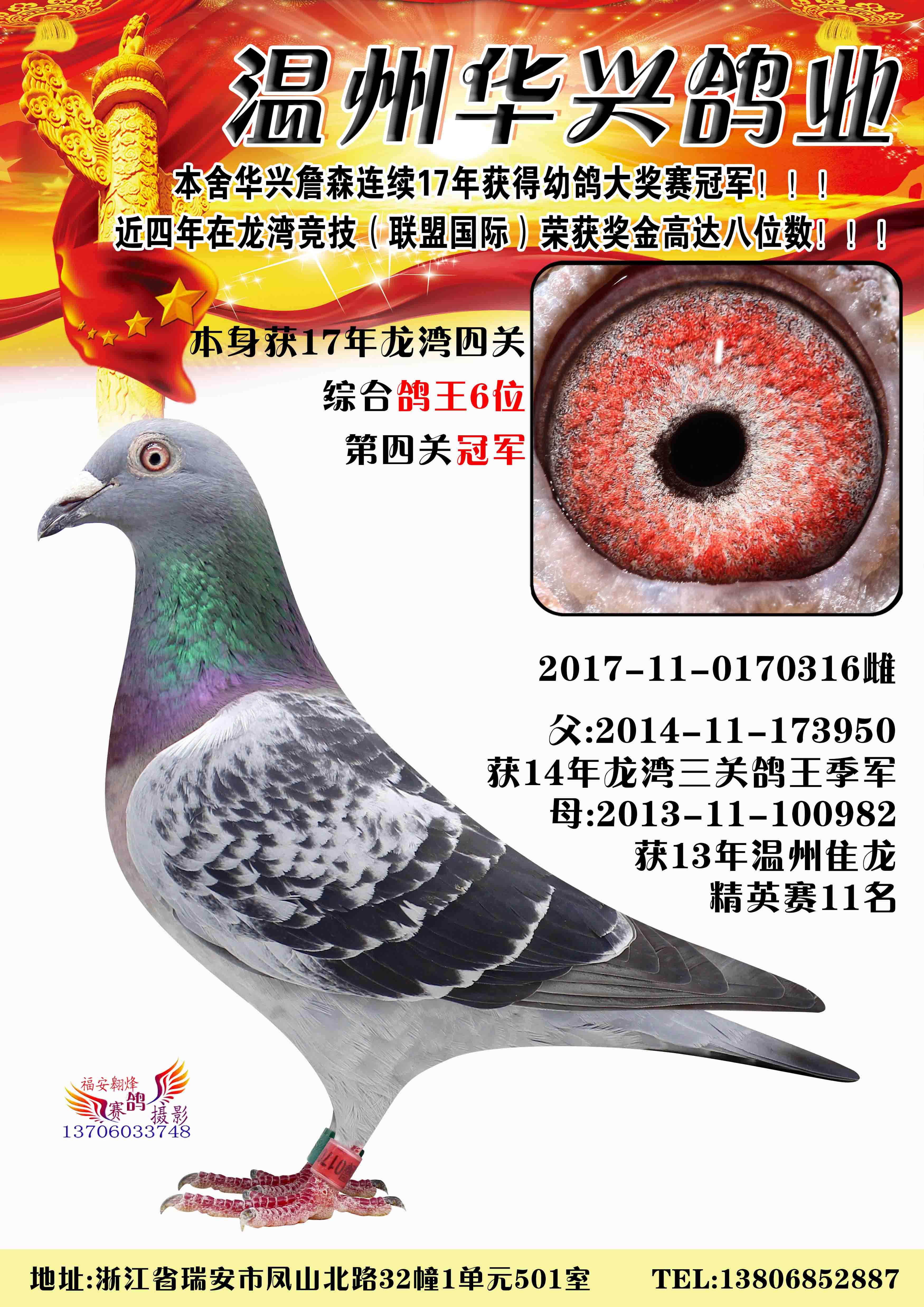 2017龙湾四关综合鸽王6名