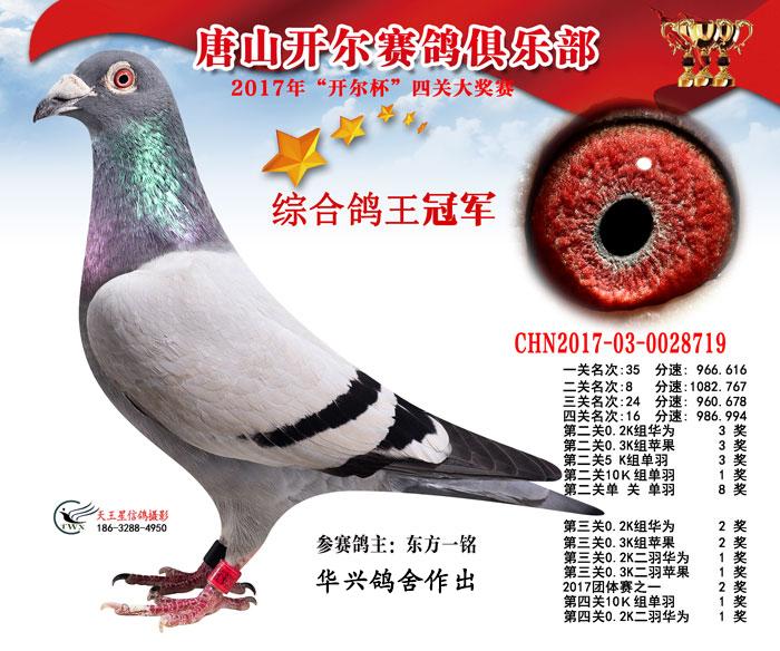 2017年唐山开尔四关综合鸽王总冠军